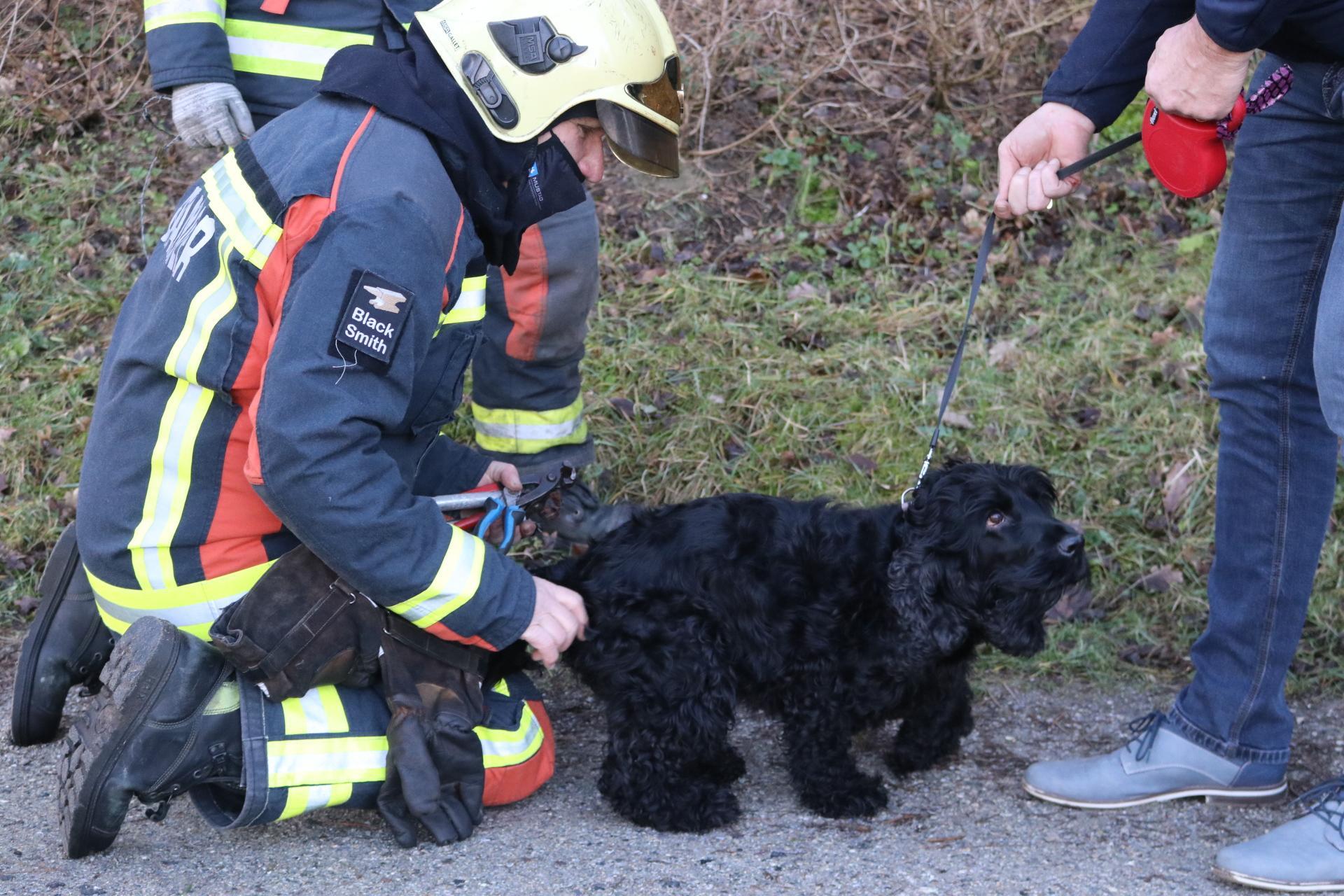 Hondje Fay door brandweer bevrijd uit prikkeldraad in Noordwijk