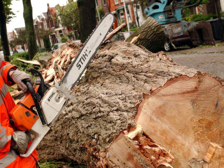Zaanstad kapt nog eens 175 bomen Hembrug (update)