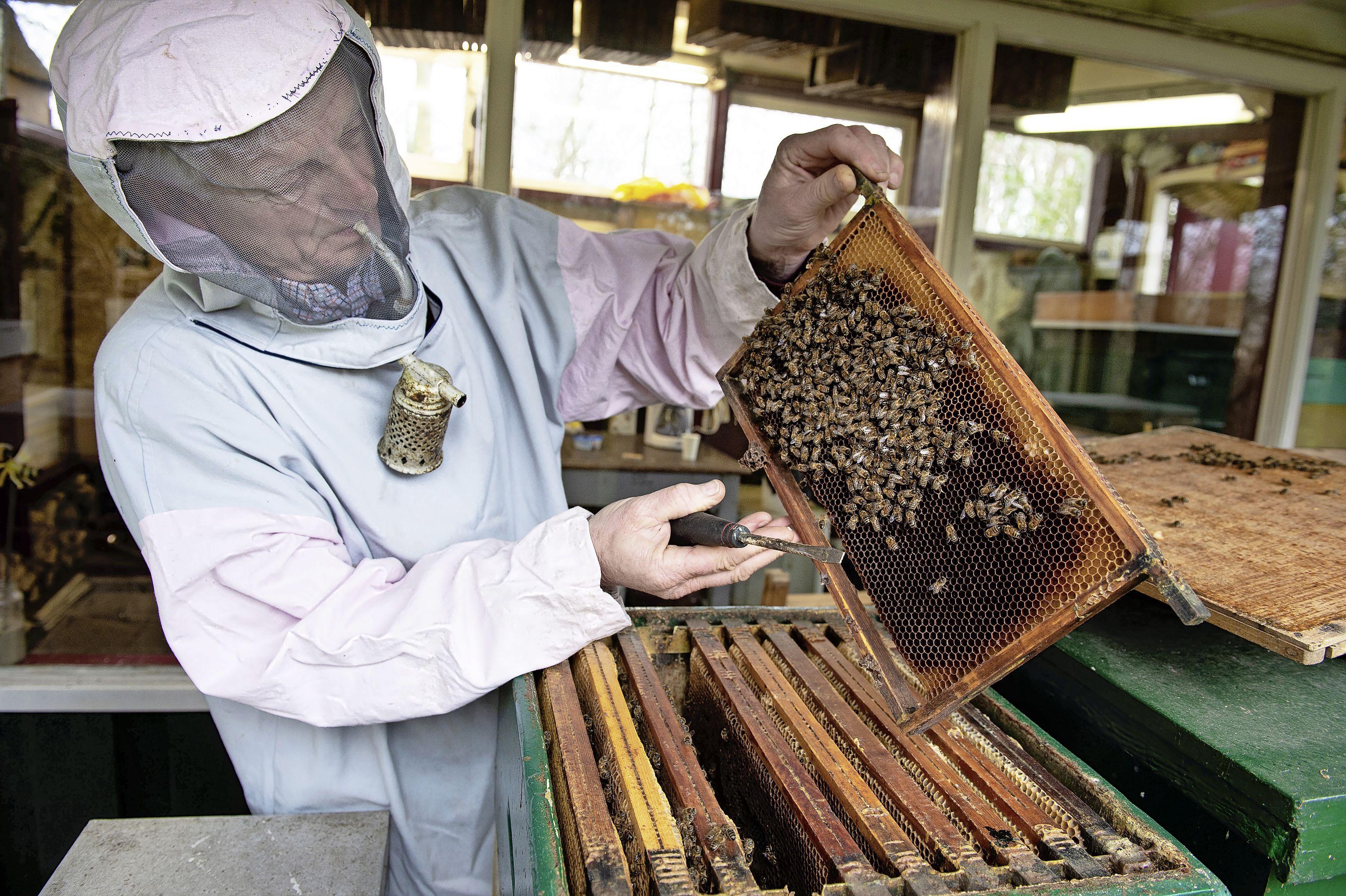 Zaanse bloemen, Zaanse bijen, Zaanse honing. Met liefde gemaakt en gekaapt: Imkers willen Zaanse herkomstbenaming voor uniek streekproduct