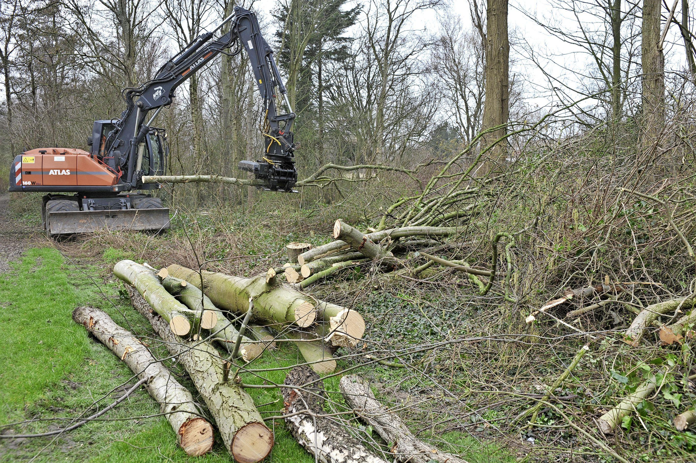 Het geloei van kettingzagen in park De Velst is begonnen. Bomen en struiken maken plaats voor de komst van 24 villa's