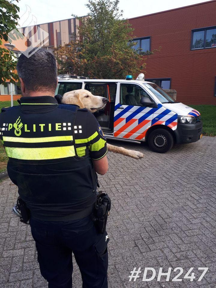 Hond gewond na veroorzaken botsing op A44 bij Oegstgeest