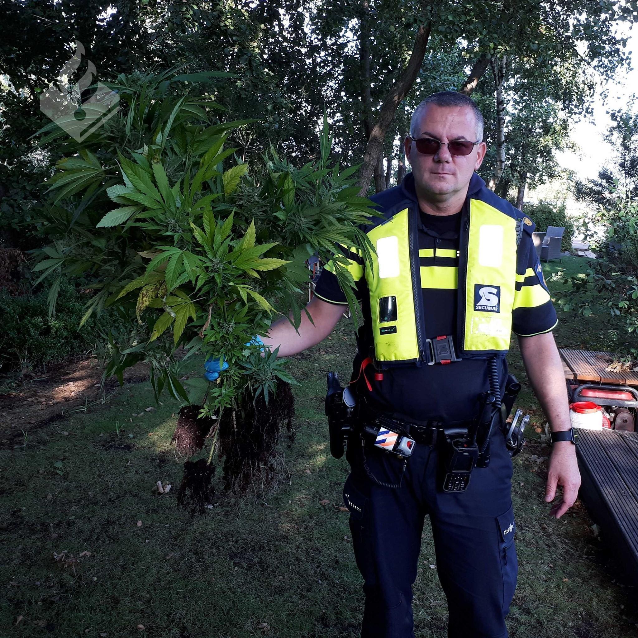 Politie vindt hennepplanten langs water in Loosdrecht