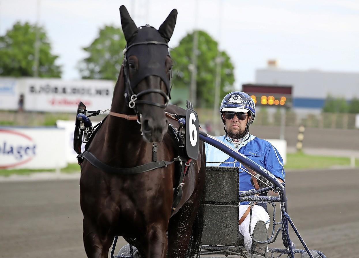 Martijn de Haan heeft zijn geluk gevonden in Zweedse drafsport: 'Er valt hier nu eenmaal veel meer te verdienen en je ziet juist steeds meer Nederlandse paarden deze kant opkomen'