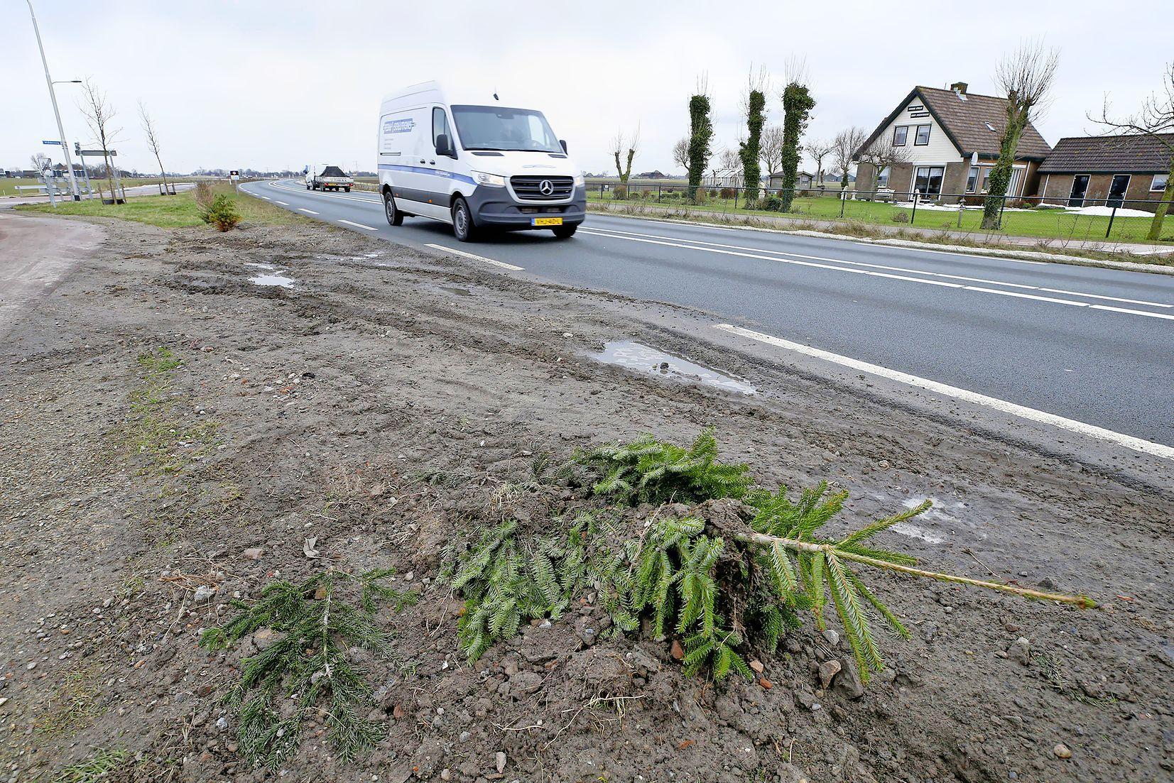 Kerstbomen in de berm langs provincialeweg Schagen-Verlaat uit de grond getrokken of plat gereden