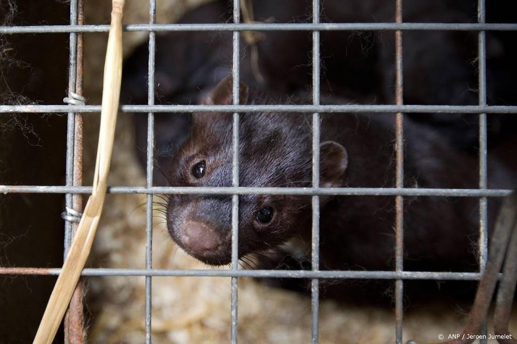 'Nertsenbedrijven overtreden coronaregels en mishandelen dieren'