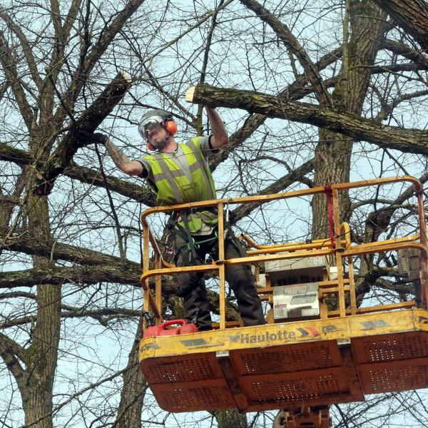 Bomenkap Hilversumse Groest trekt bekijks (video)