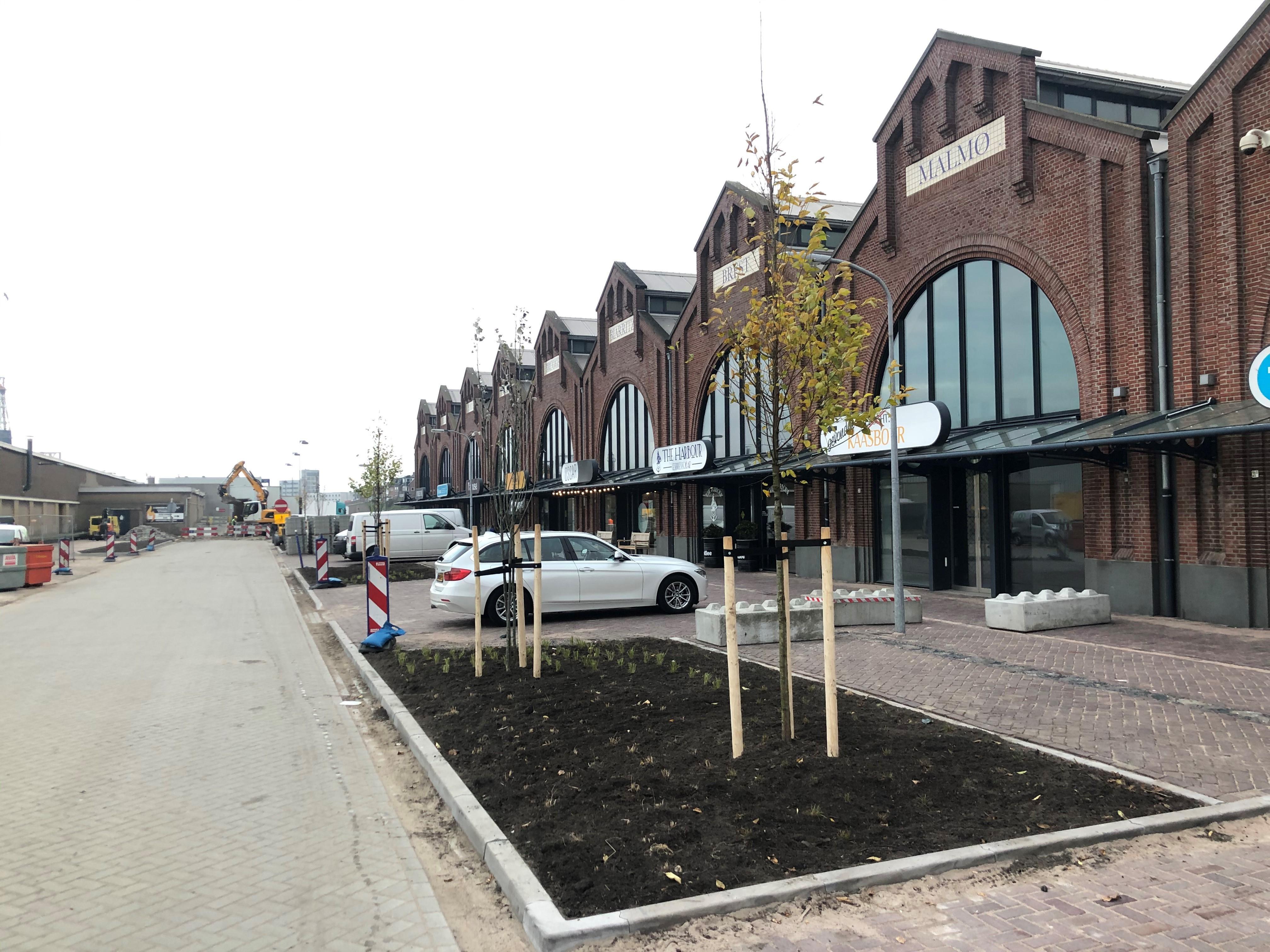 Met de plaatsing van bomen bij de Halkade in IJmuiden is de metamorfose van het gebied bijna voltooid