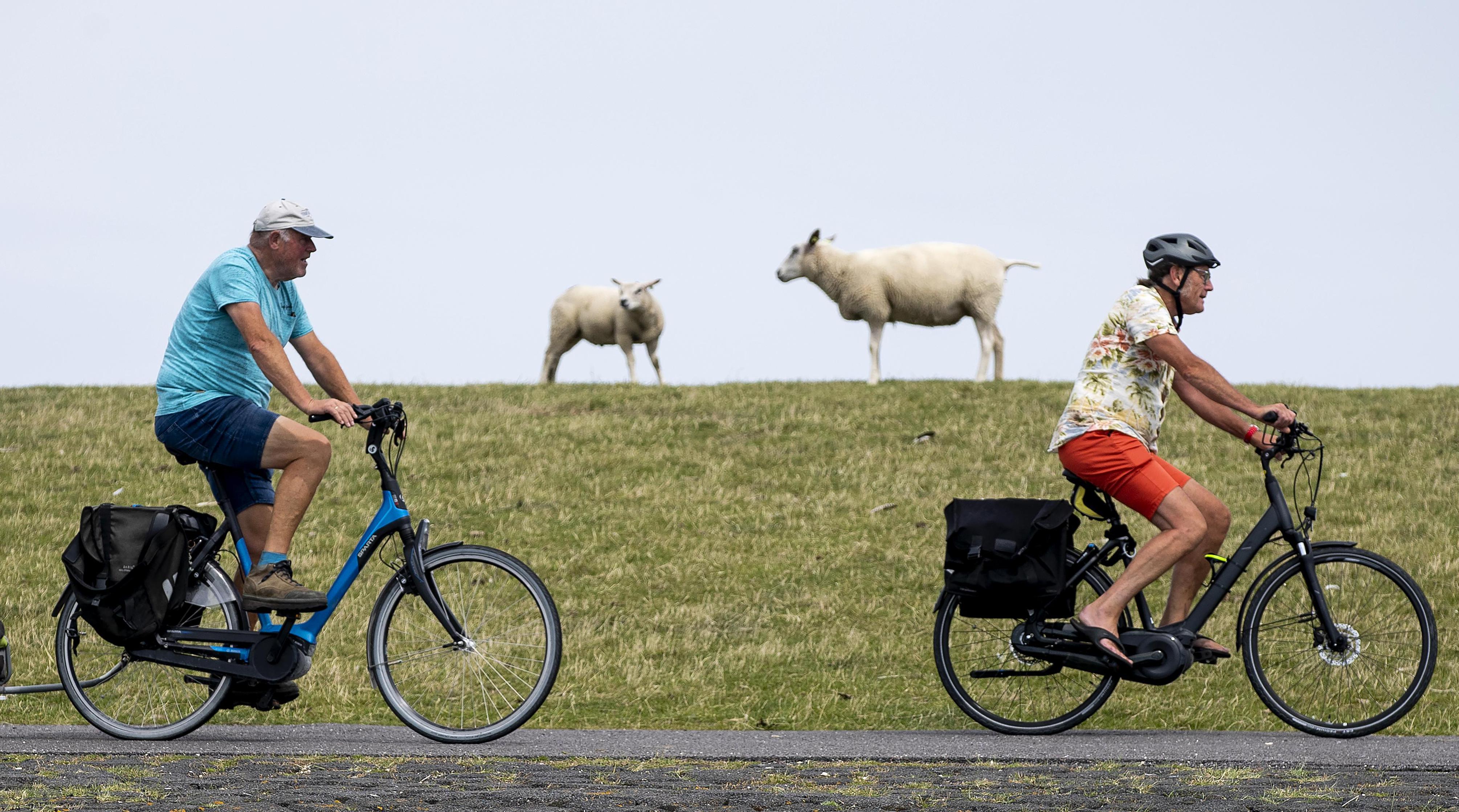 Gewone fietser is steeds vaker de klos: afgesneden, opzij getringeld en in de berm gedrukt | Commentaar