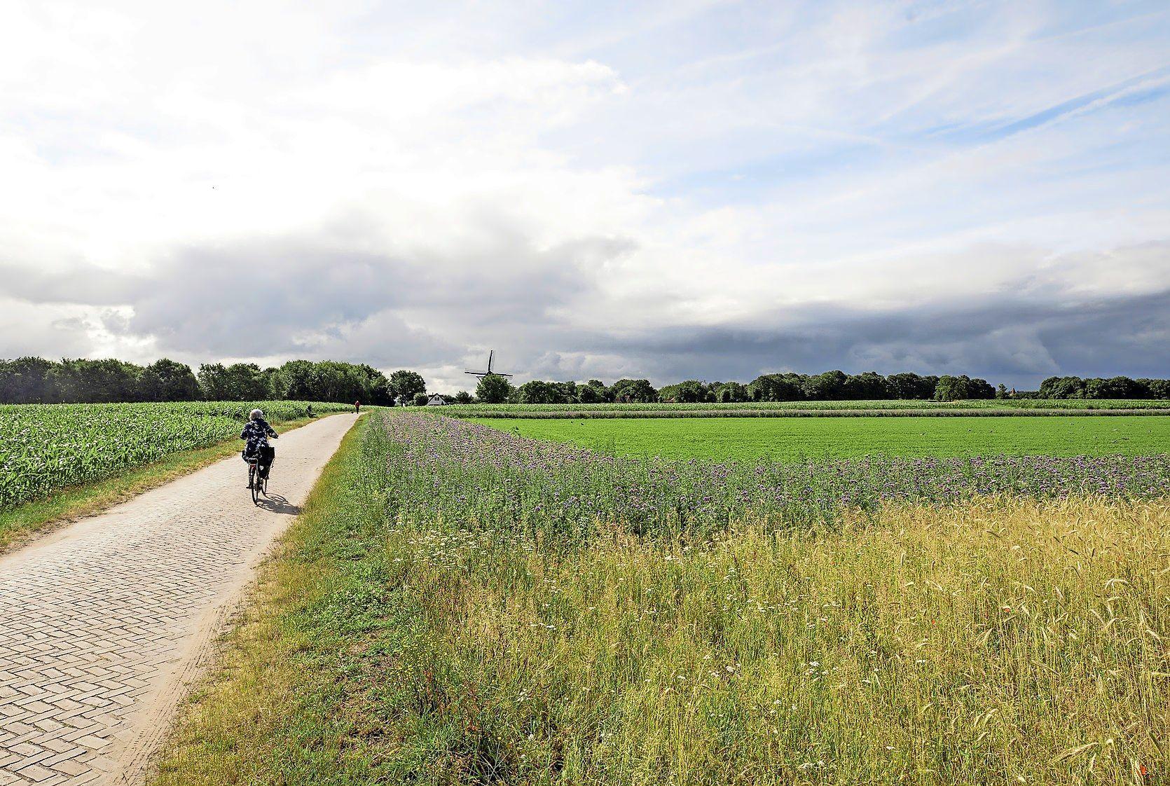 'Iedereen wil bouwen, maar als je vraagt waar dan heeft niemand een antwoord', zegt wethouder Aukje Treep. Soest gaat dapper door richting onvermijdelijk dilemma: Groen? Of woningen?