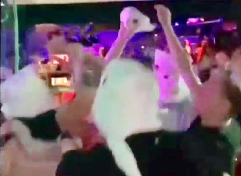 'Wat ben je dan voor domme lul?!' Hossende jongeren op kermisavond: kroeg Tuitjenhorn dicht na filmpje met ontspoord kermisgedruis