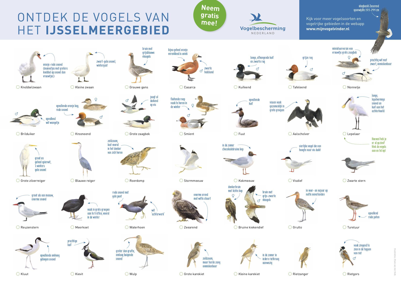 Op vogelsafari langs het IJsselmeer en Markermeer met een handige kaart
