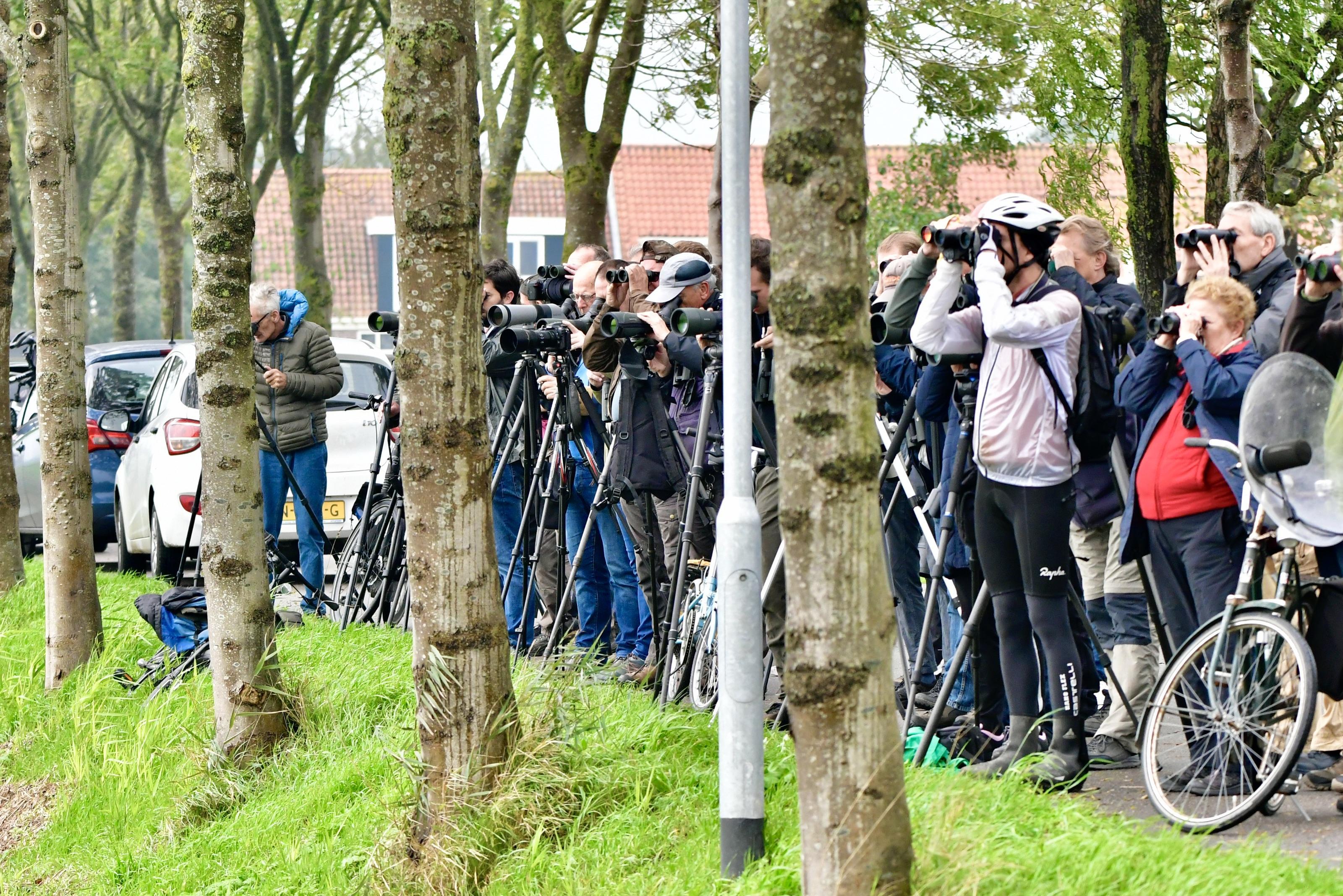 Vogelspotters spotten zeldzame spotvogel aan Zuiderweg in Wijdewormer
