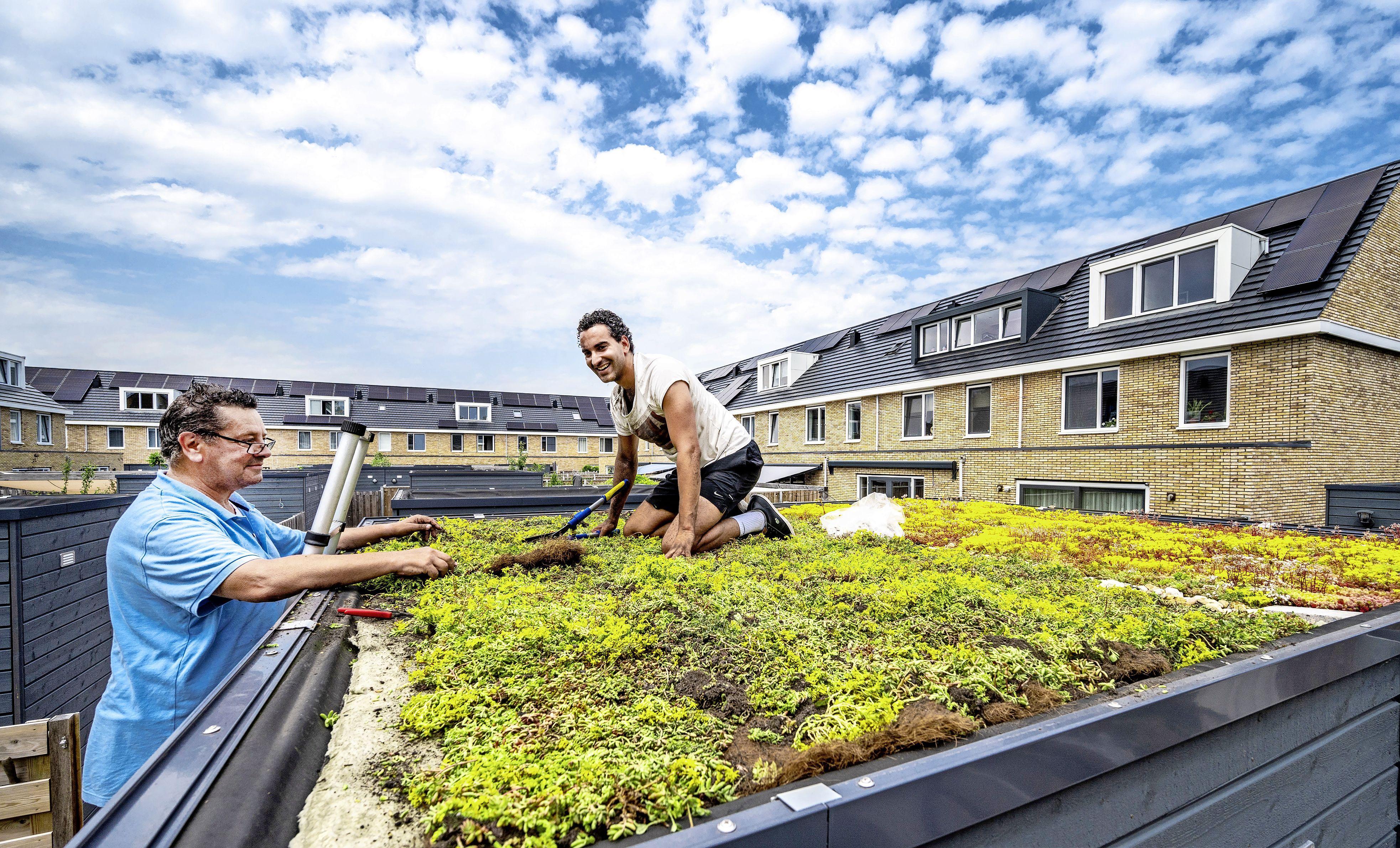 Groene daken in de Groene Linten; sedumdaken en regentonnen met subsidie
