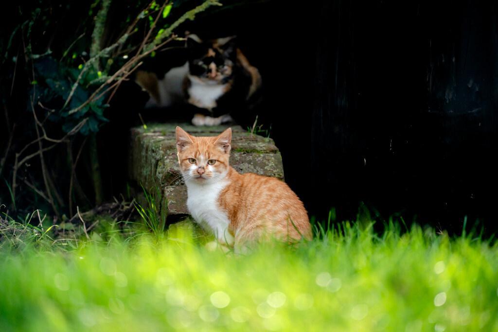 Verbod gevraagd op afschieten verwilderde katten in buitengebied Soest; 'Vang, castreer en herplaats ze, dat is veel diervriendelijker', vindt DSN