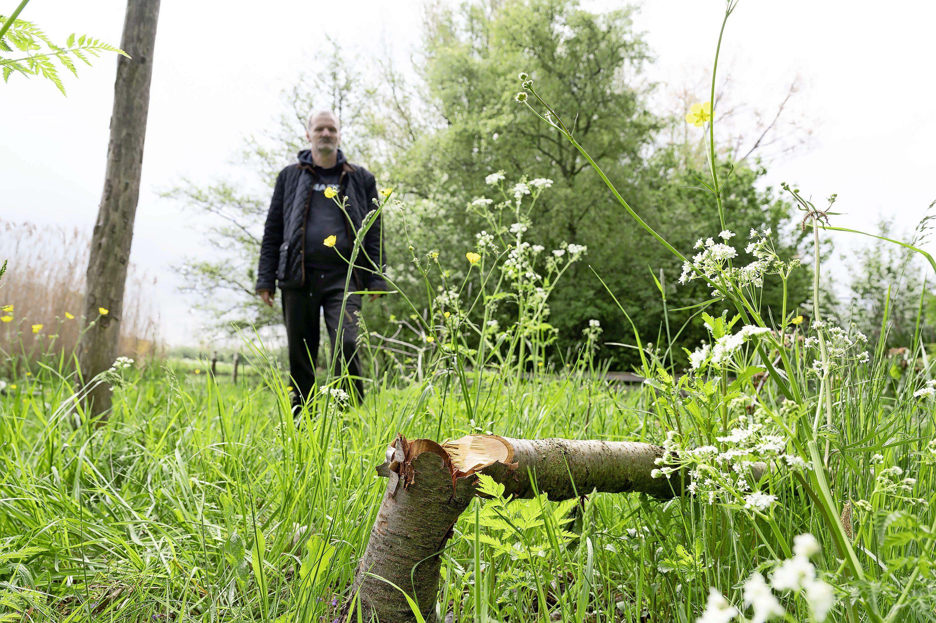 Hoe vrijwilligers van een buurttuin wanhopig worden door vernielingen. Vuistdikke fruitbomen zijn vlak boven de grond omgehakt