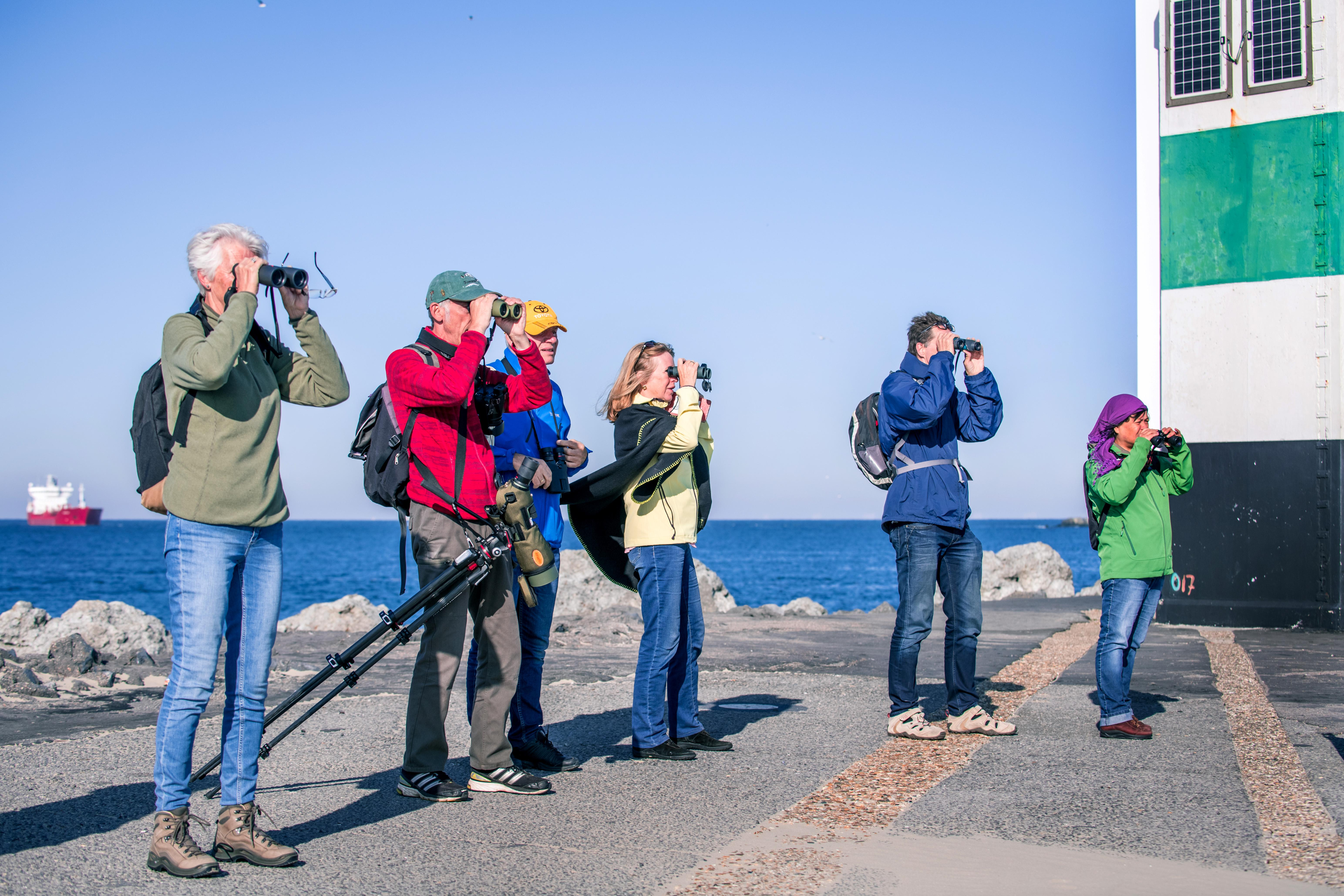 Vogelaars trekken naar het strand van IJmuiden aan Zee en de Zuidpier: 'Hoor mensen, dat geluid: zizip!, zizip! Dat is de graspieper'