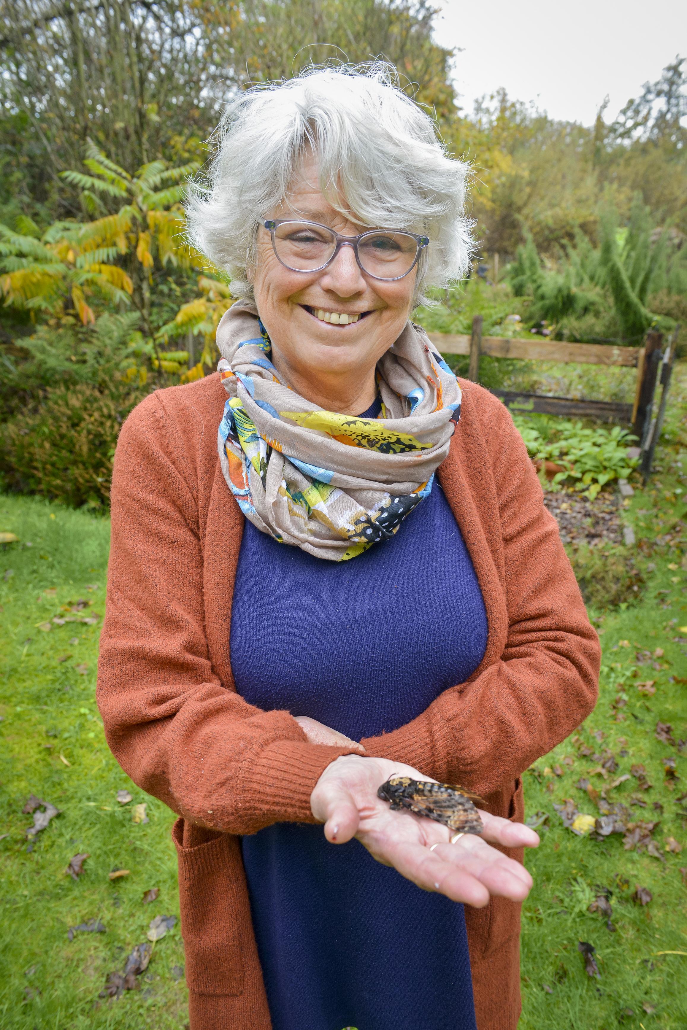 'Doodshoofdvlinder spreekt enorm tot de verbeelding.' Sytske Dijksen vindt levend exemplaar op Texelse strand
