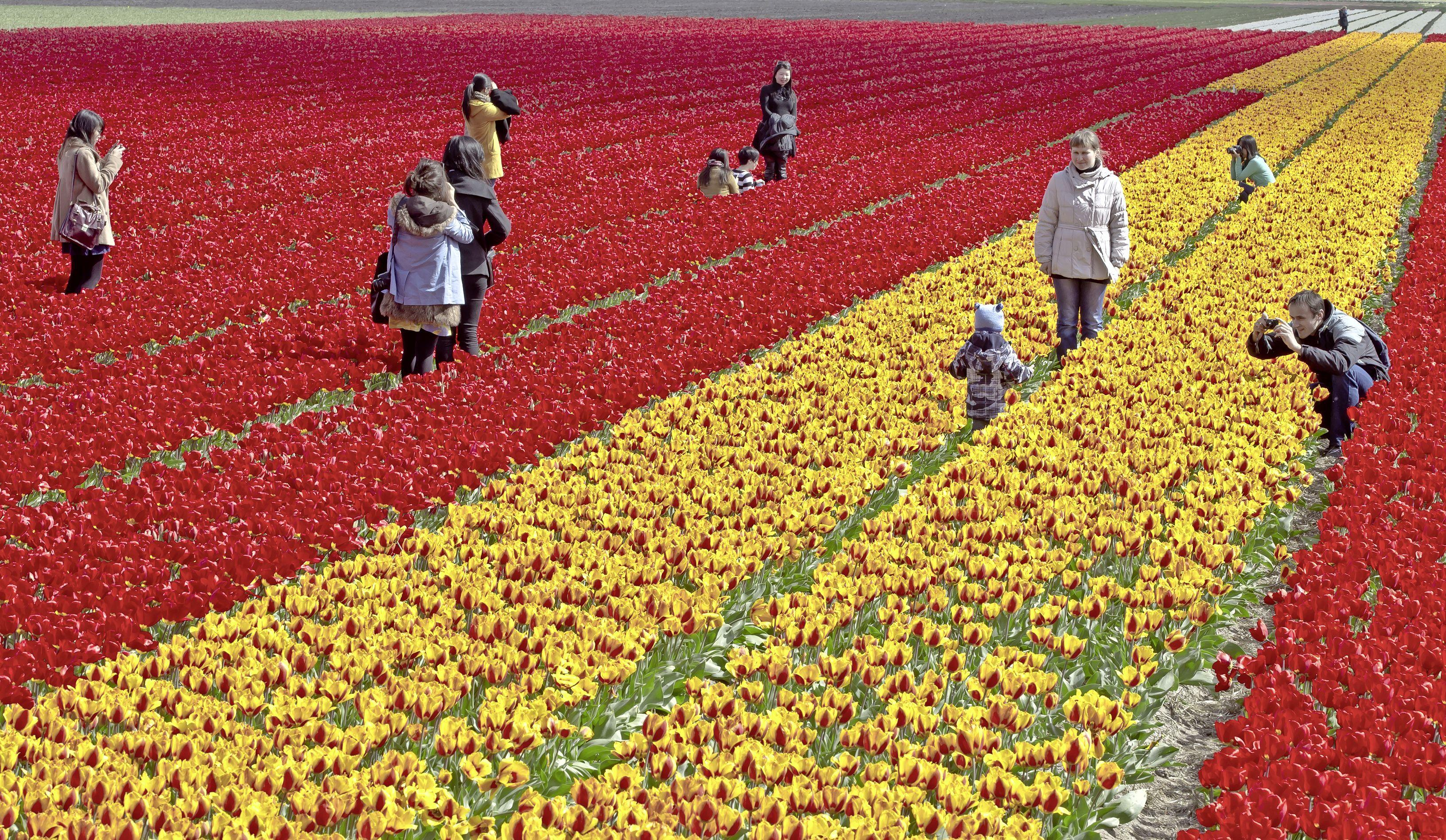Wegen niet op voorhand dicht als de bollenvelden in bloei staan: 'Maar als het nodig is kunnen we met één pennenstreek hekken laten aanrukken'