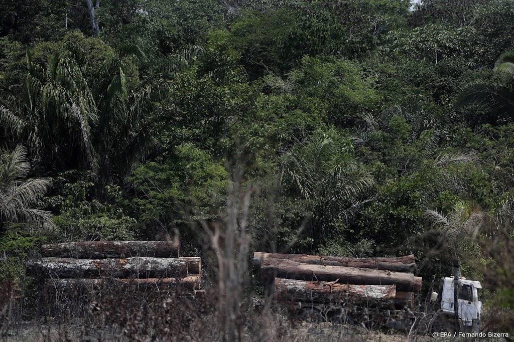 Stukken Amazone-regenwoud illegaal te koop op Facebook