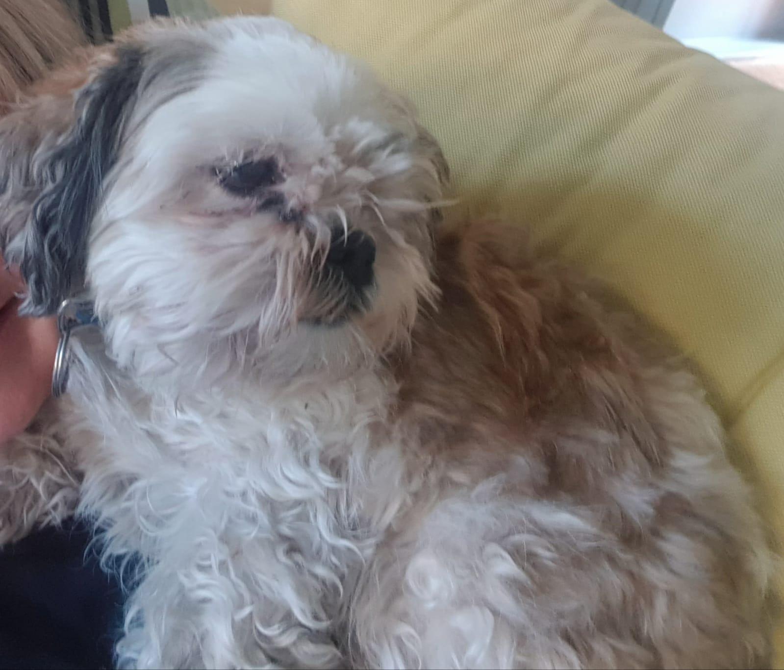 'Ze was opeens weg, terwijl ze nooit wegloopt', familie treurt om verdwenen hondje Deva
