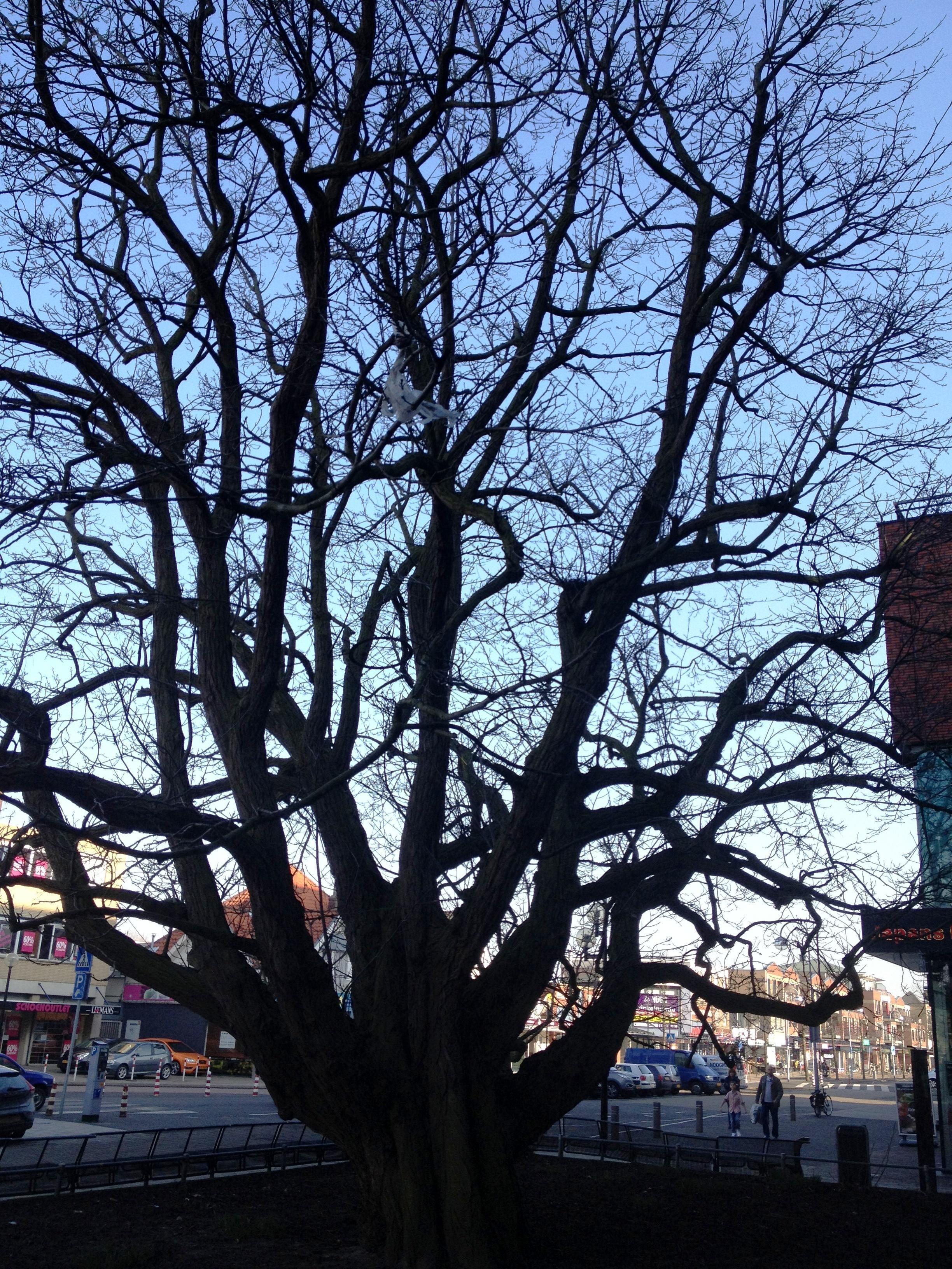 Haarlemmermeer verklaart nog eens 132 bomen monumentaal, nu zijn er 815 in totaal