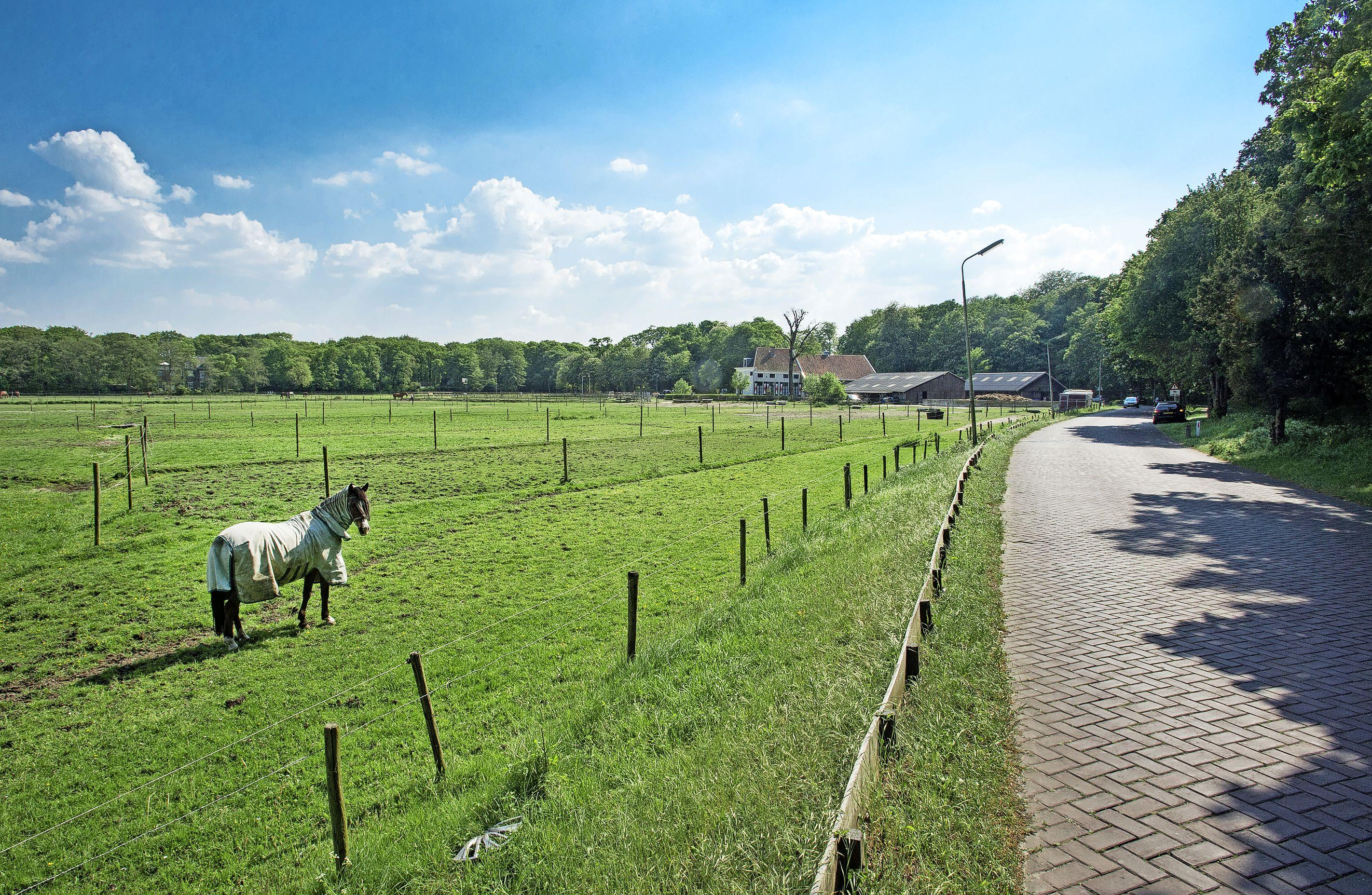 Zeer besmettelijk paardenvirus bij stal in Santpoort-Noord: 'In deze coronatijd is stal een plek waar je kunt ademhalen, maar in wat voor ellende zitten we nu weer'