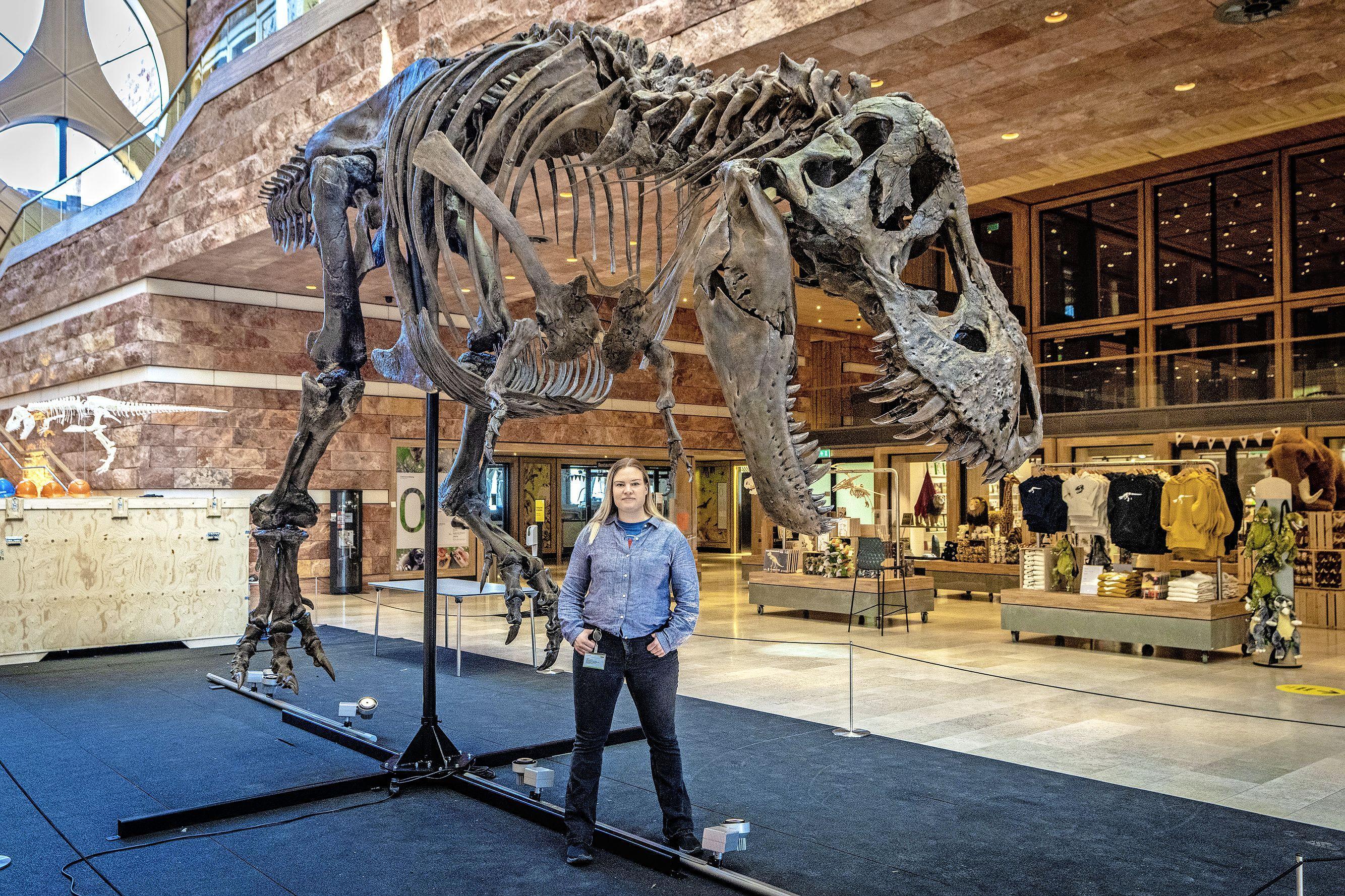 3D-kopie Trix de T. Rex Naturalis klaar voor vertrek naar Japan