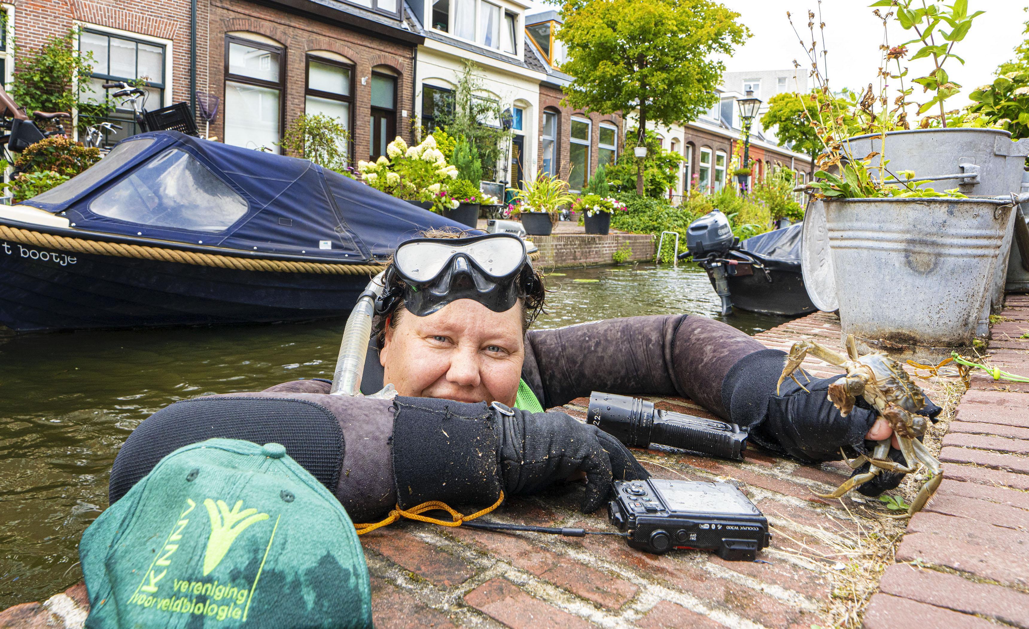 Leiden verbiedt het vangen van kreeften, ook al vernielen ze kades en stadsnatuur
