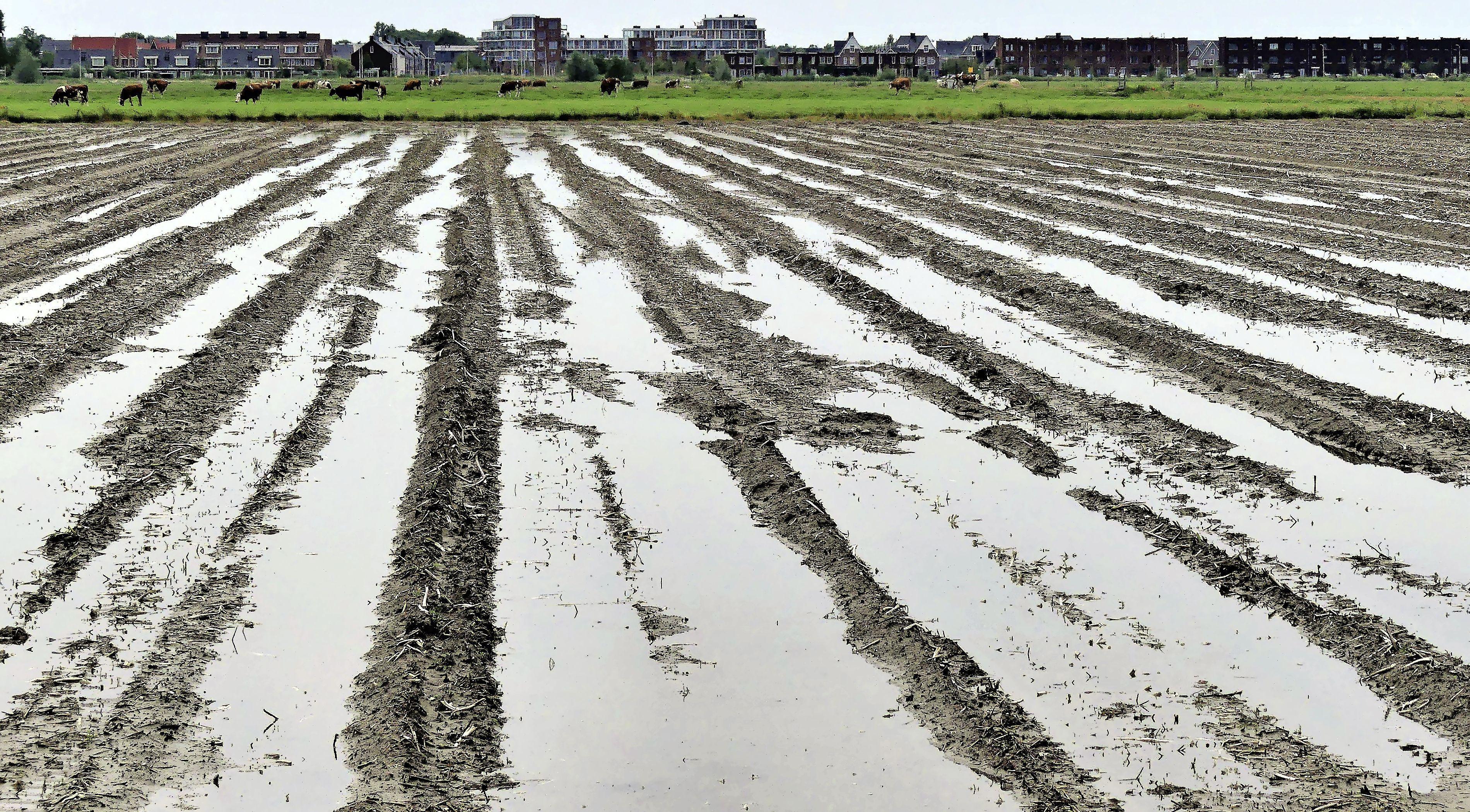 Stek en gemeente Noordwijk druk met wateroverlast