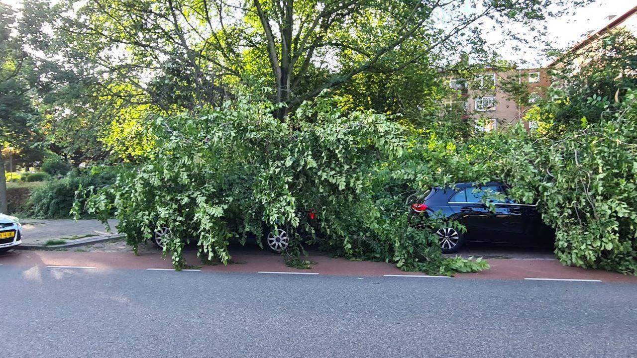 Groot deel van boom valt op geparkeerde auto's in Heemskerk