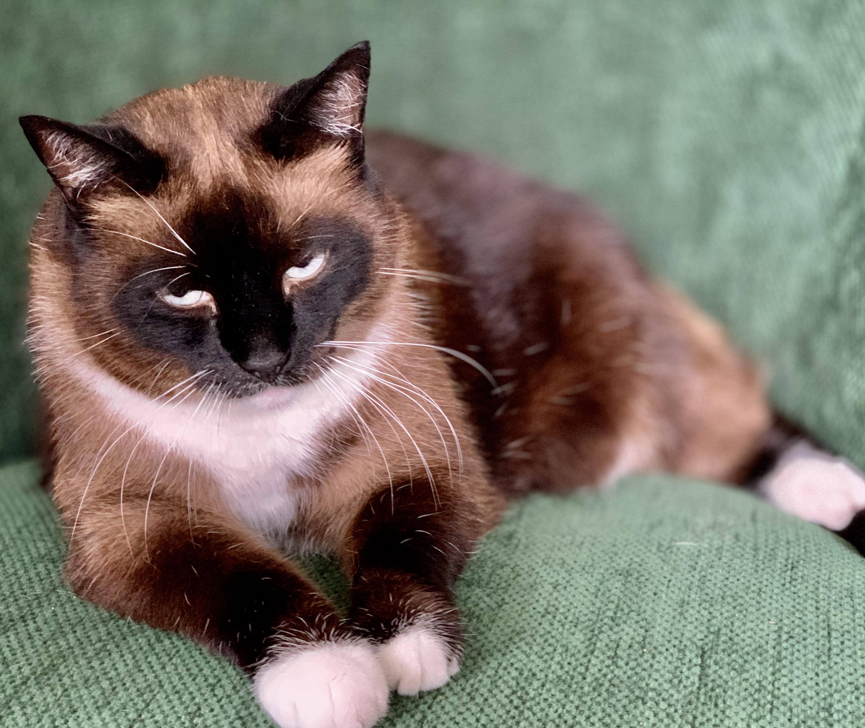 Katten zouden verantwoordelijk zijn voor de dood van tussen de 17 en 200 miljoen vogels. Een nogal ruwe schatting zeg maar | Column