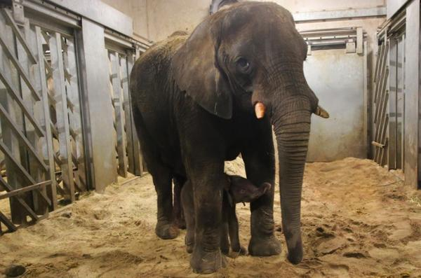 hoe slaapt een olifant