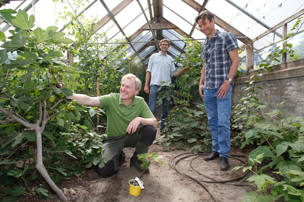 Dromen van een voedselbos op landgoed Soestdijk; Oude koninklijke kwekerij in een 'notenpaleis' omgetoverd door Bomenplanters