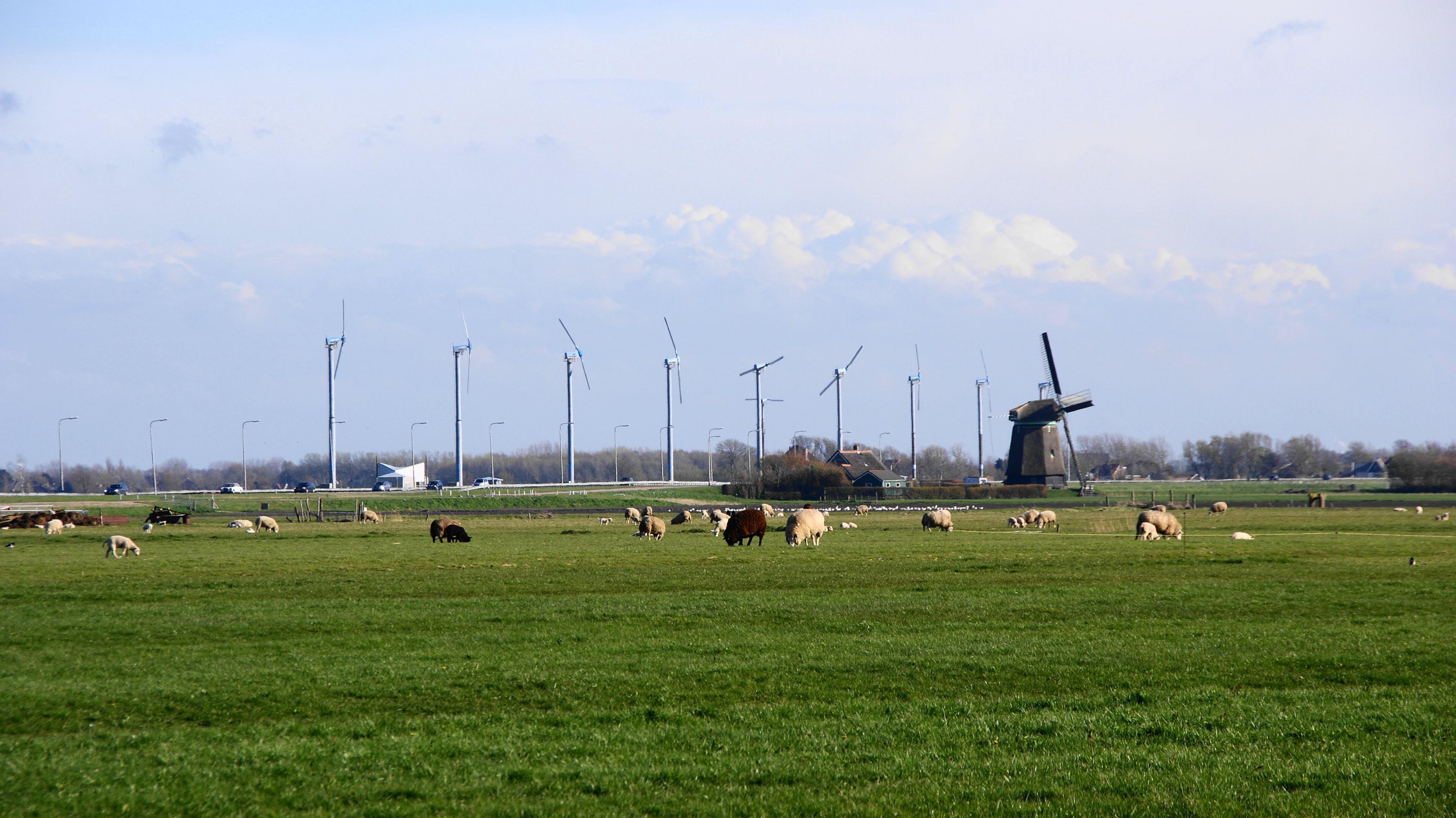 Coöperaties blijven strijden voor windmolens in de regio