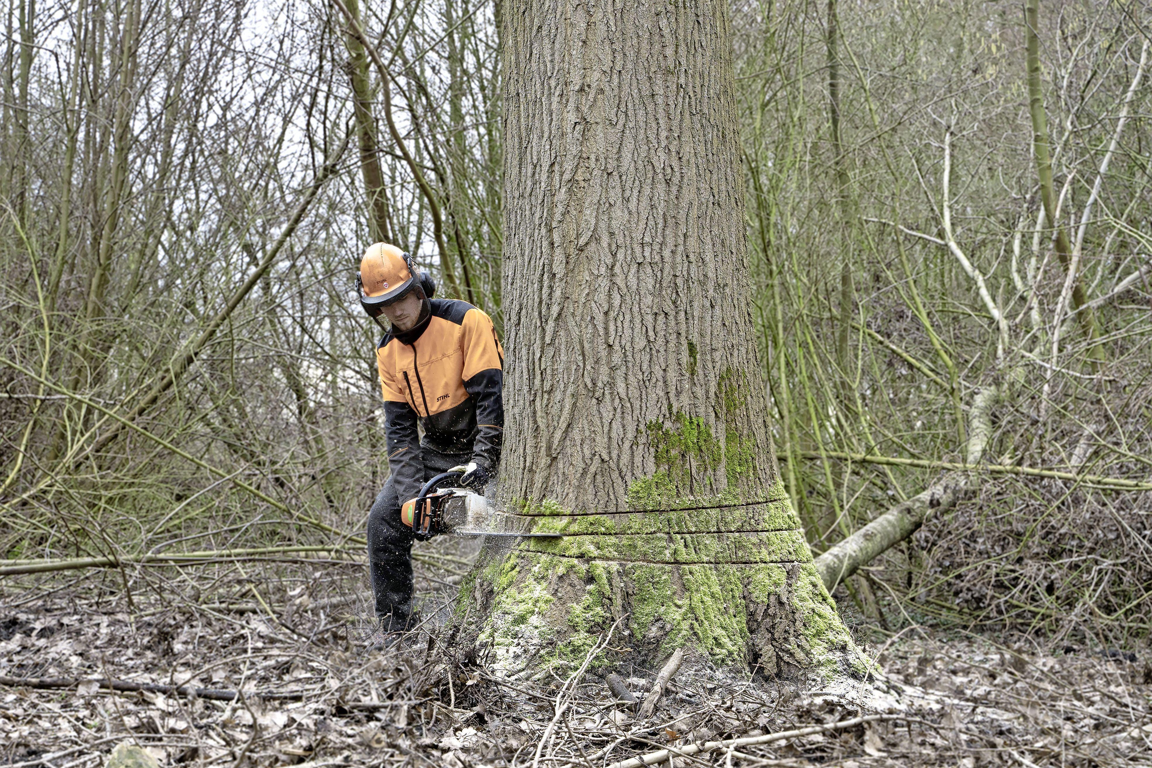Recreatieschap Westfriesland doodt populieren door ze te ringen: 'Zo'n dode boom is een natuurgebied op zich'