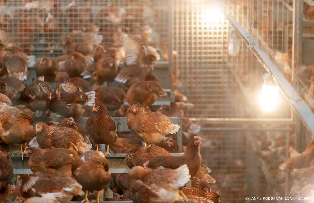 Pluimveehouders moeten kippen binnenhouden wegens vogelgriep