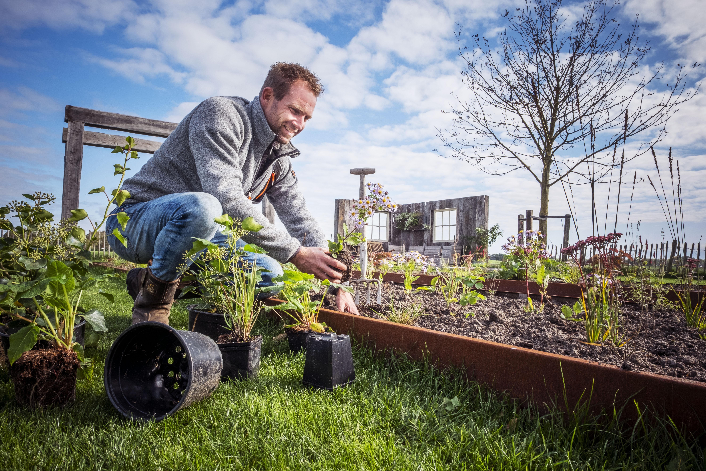Boer Tom plant vaste planten