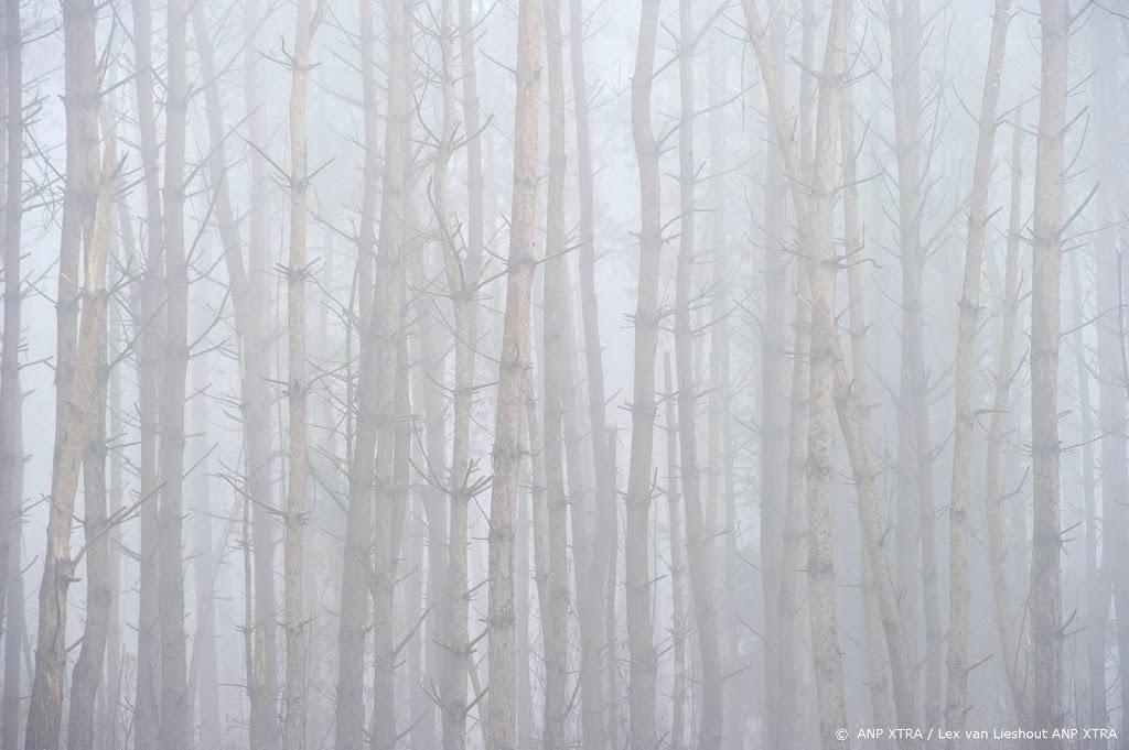 Waarschuwing voor dichte mist in vrijwel het hele land