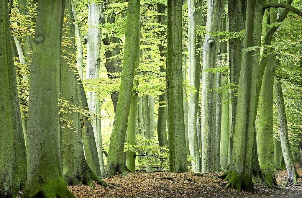 Hollands Kroon krijgt een 'bomenboost': een kleine tweeduizend bomen erbij in de komende tien jaar