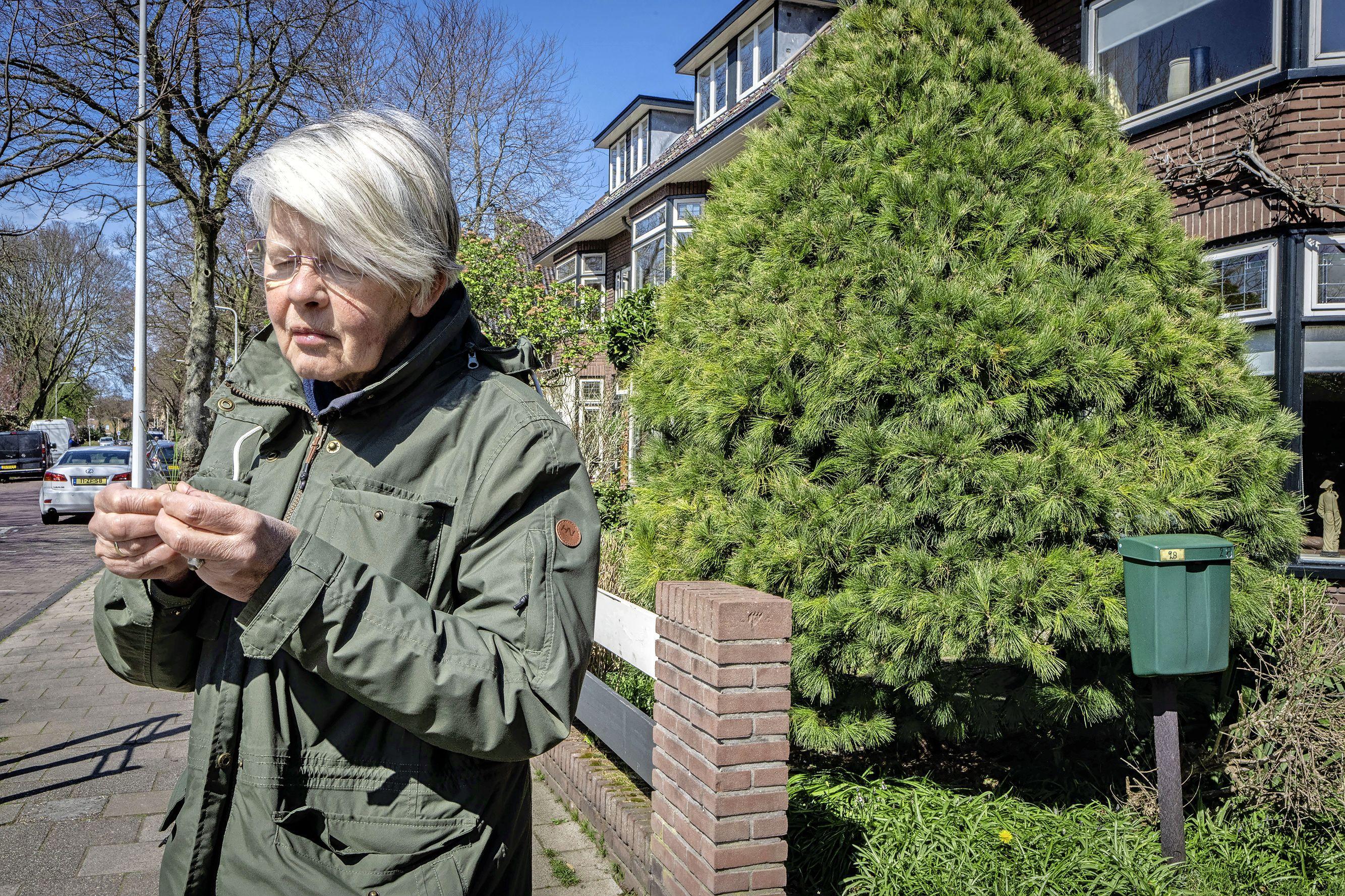 Rinny E. Kooi liep een bijzondere boom tegen het lijf: 'Ik word ook wel de Leidse bomenspecialist genoemd'