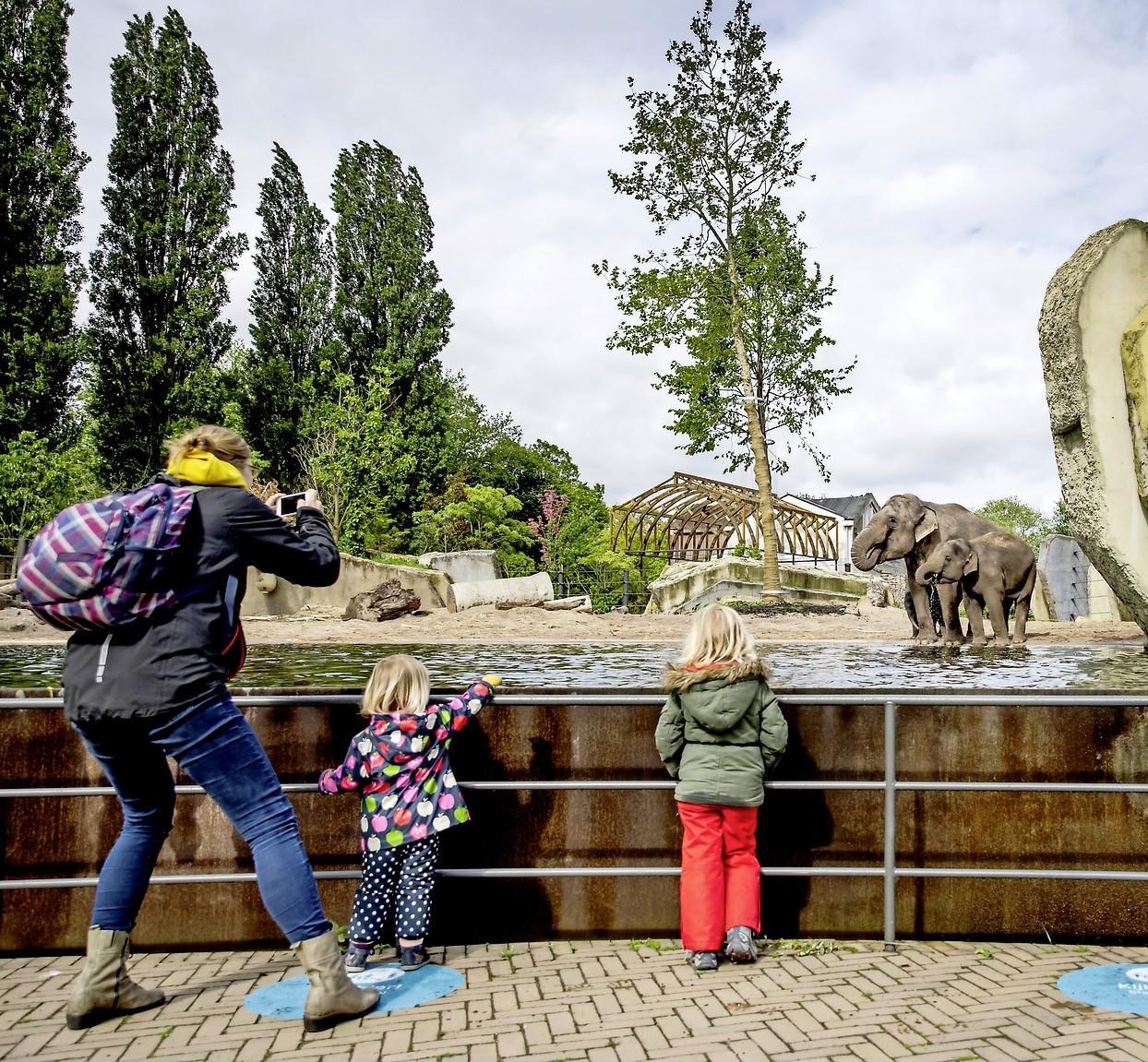 Hoe een bedankje op de Facebook-site 'Je bent Velsen-Noorder als...' uitgroeit tot een dagje uit met de kinderen naar Artis | column in 60 seconden