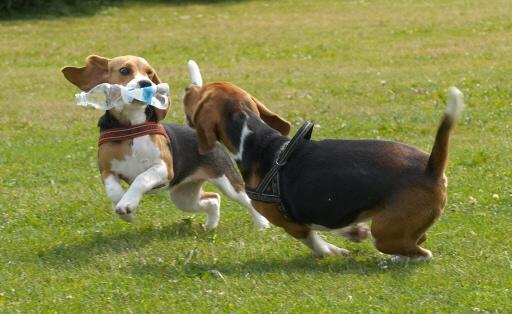 Tarief voor hondenbelasting gaat in Noordwijk voorlopig niet omlaag