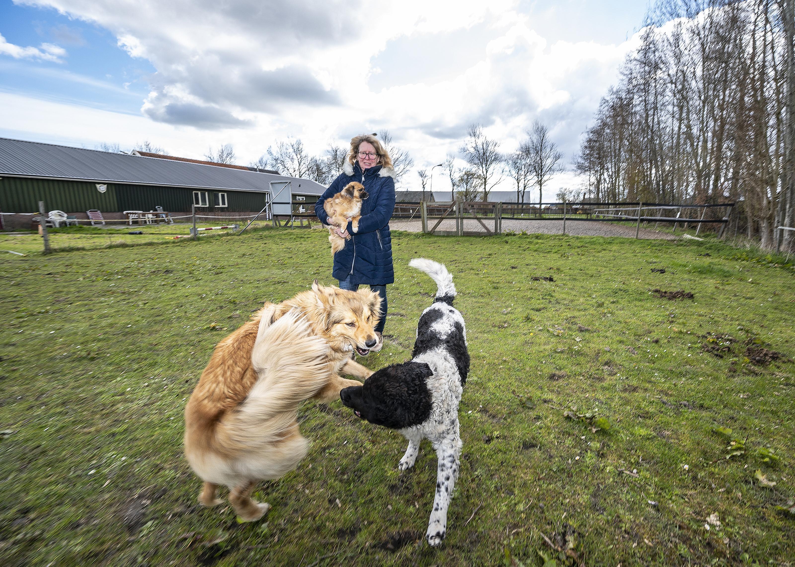 Binnen de bebouwde kom wel hondenbelasting, daarbuiten niet. In de Beemster vinden ze het maar vreemd: 'Ik wil dan wel een losloopveld voor Gaston'