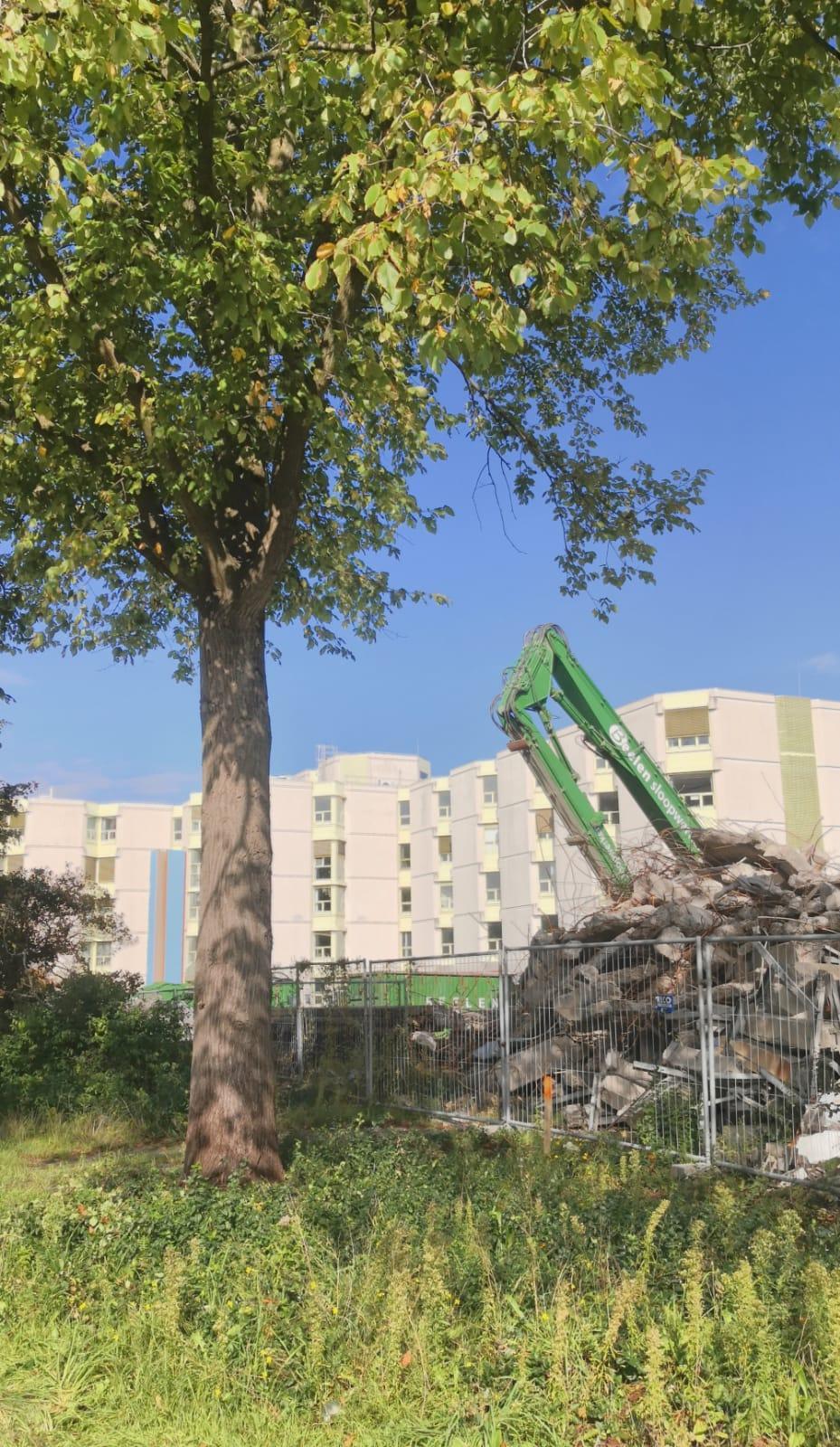 Bomenridders boos over 'illegale' kap in Schalkwijk: 'Haarlem kapt bomen zonder vergunning'