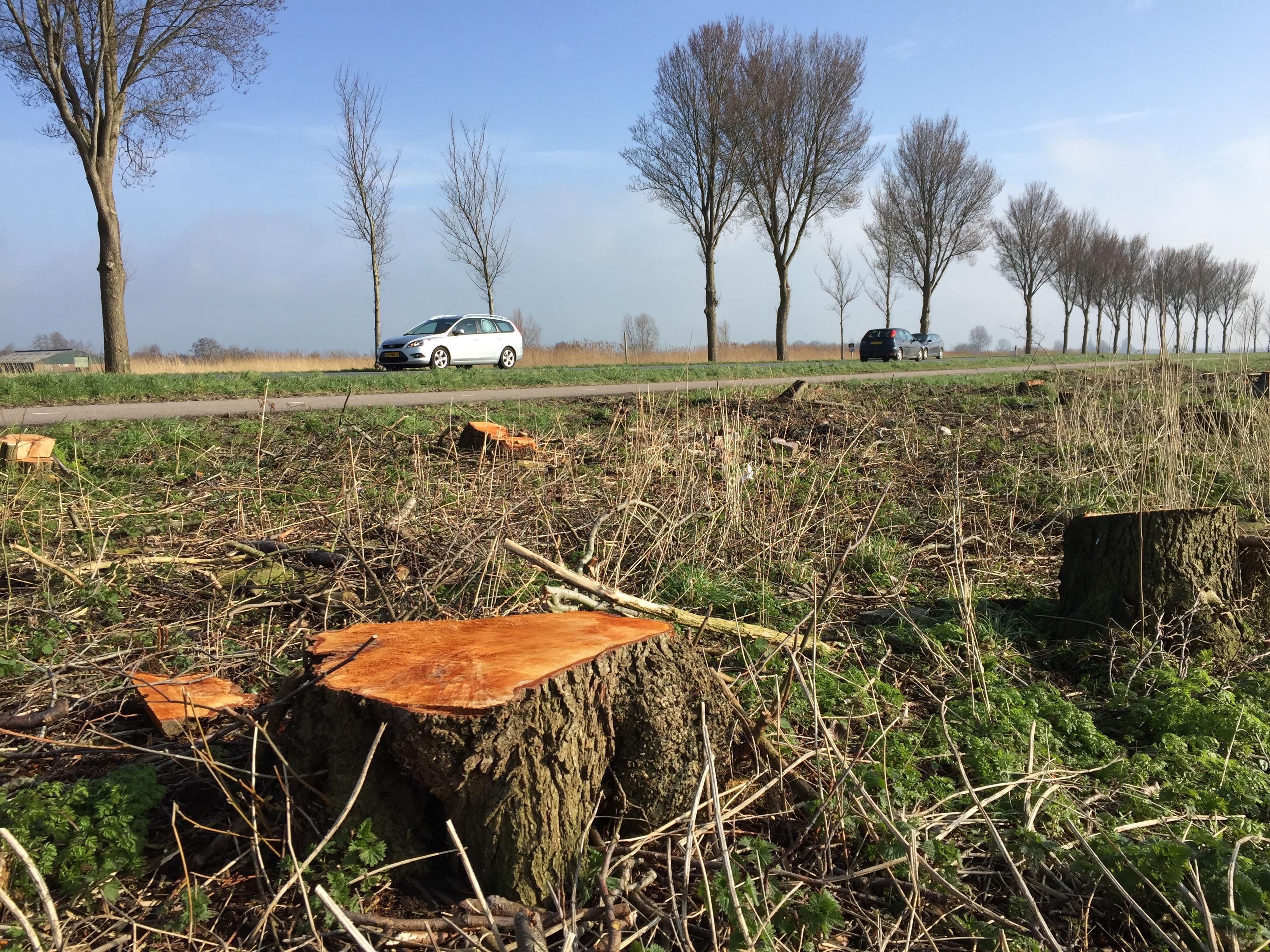 Compromis provincie en Opmeer over 60-kilometer-zone A.C. de Graafweg betekent redding voor 160 bomen