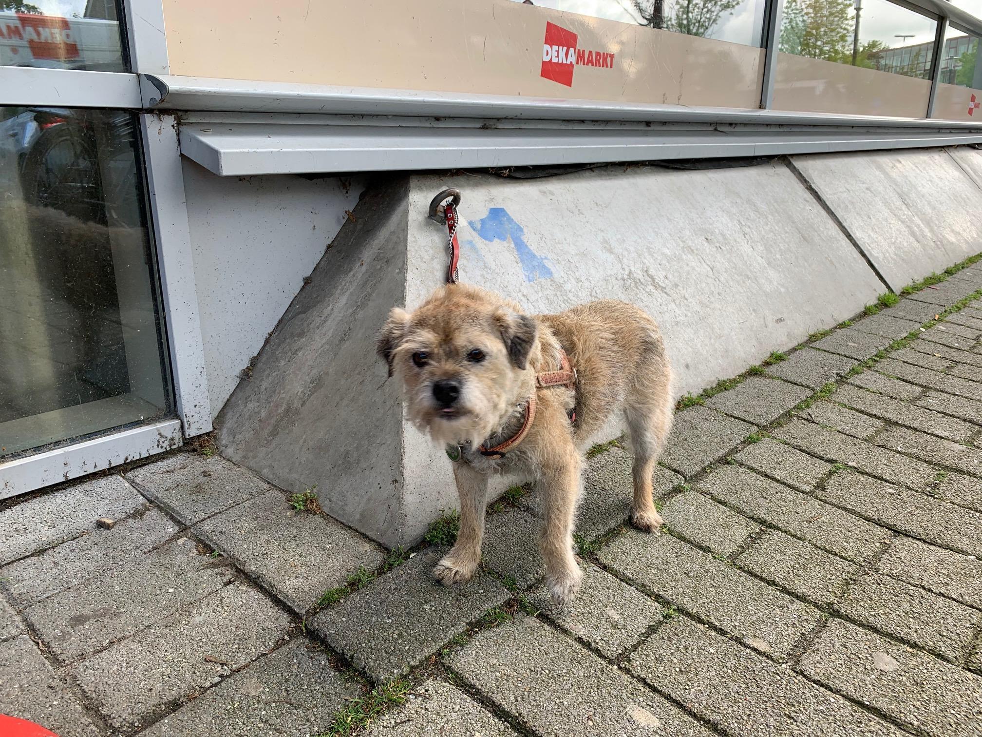 Een oploopje bij mijn hond die buiten bij de Hema staat; ik zie iemand een bak water neerzetten en de Dierenambulance is al gebeld. 'Een echte dierenvriend doet zoiets niet', sist een man me toe   column