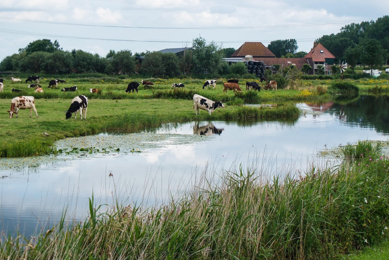 Inspecteurs waterschap controleren vanwege corona vooral 'vanuit de auto' of veehouders milieuregels naleven