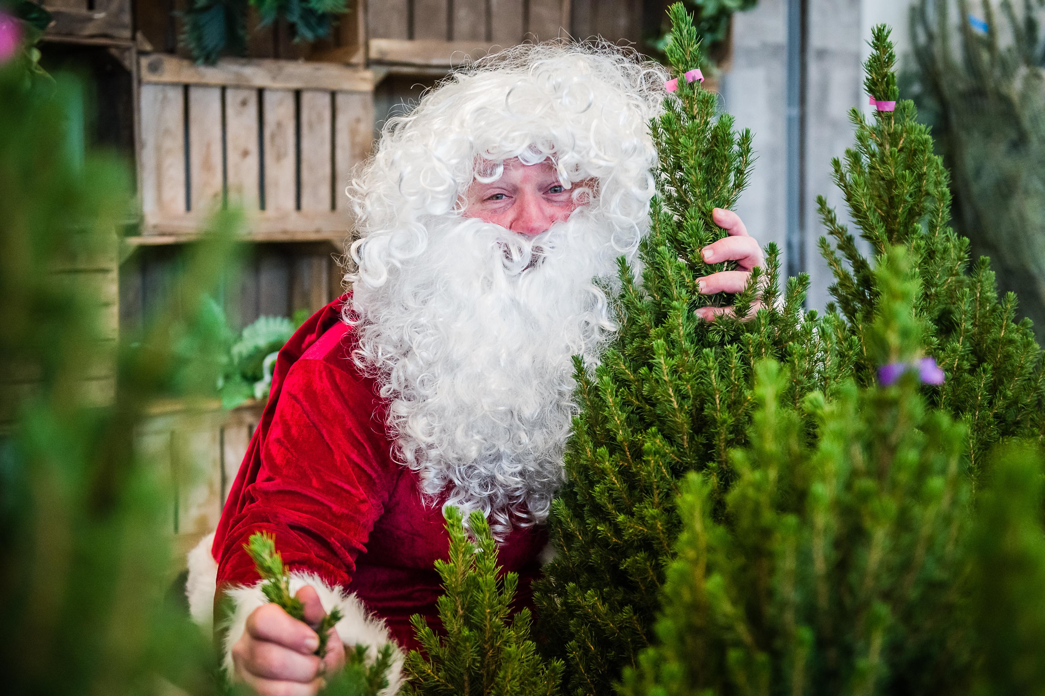 Van bar naar spar, Peter Coster van café De Artiest in Purmerend gaat kerstbomen verkopen: 'Dit is mijn redding'