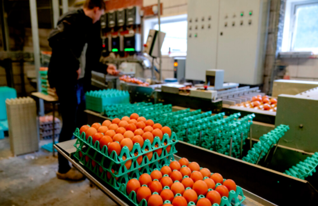 Verbod op vervoer pluimvee in en om Alphen, vanwege uitbraak vogelgriep