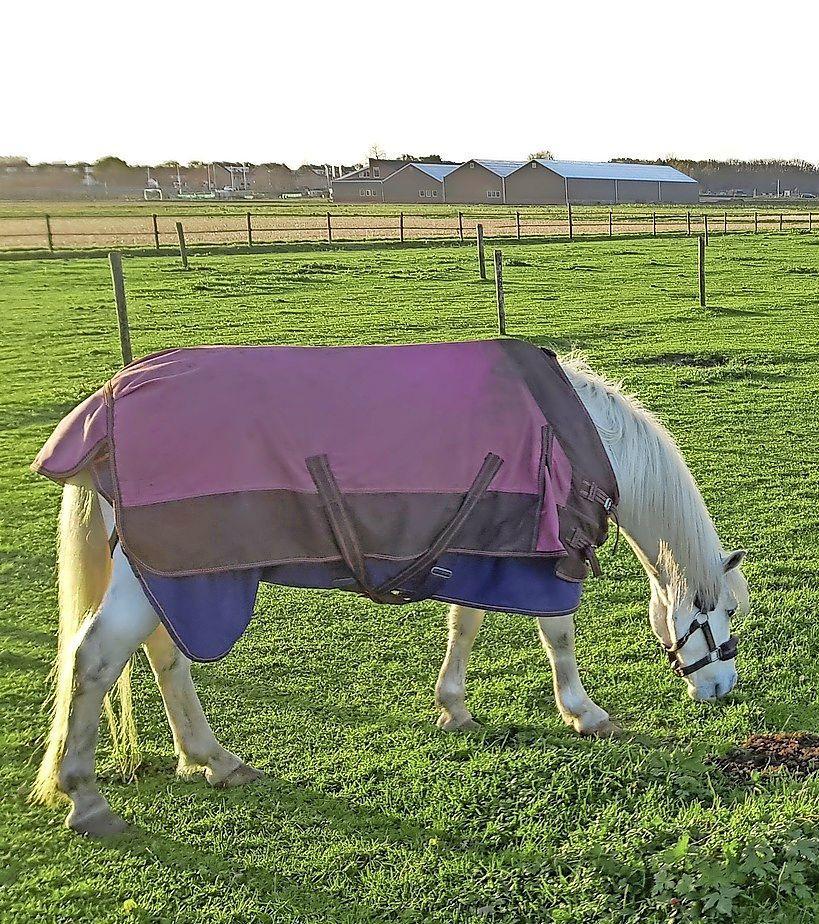 De provincie is onvermurwbaar, paardenweitjes en moestuintjes op bollengrond moeten weg: 'Volgens mij zijn de vijf bollenstreekgemeentes goed bezig'